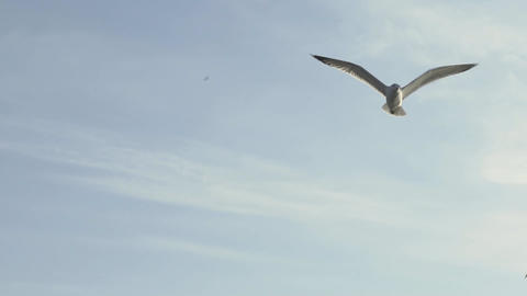 Sea Gulls Flying In The Sky Footage