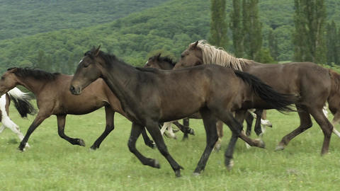 Herd Of Horses Running On The Field Footage