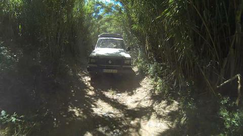 Safari car tour Footage