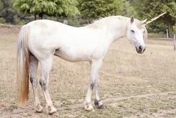 Unicorn5 Fotografía