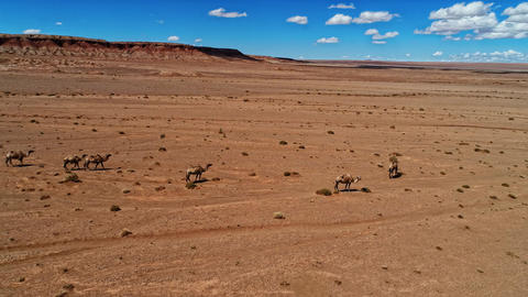 Group of Camels in the Mongolia Desert 영상물