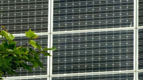 Solar energy, photosynthesis and wind concept of natural energies Footage