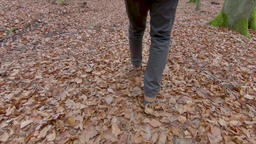 Walk through autumnal forest. Autumnal leaves Footage