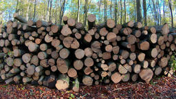 Forest felling, pile of logs Archivo