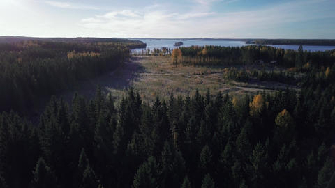 Clearcutting area behind boreal spruce forest Archivo