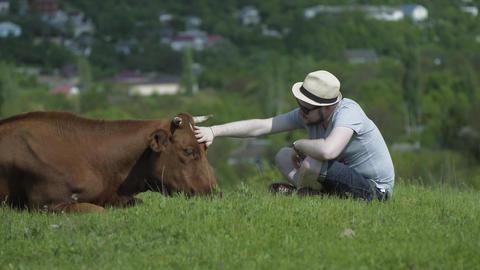 Man Stroking A Cow Head Footage