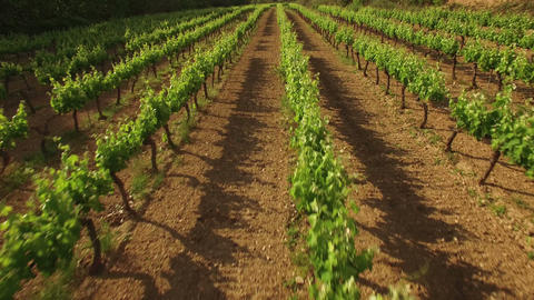 Flying Over The Vineyard In Spring stock footage