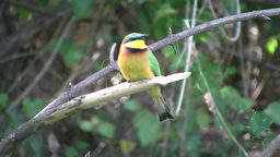 A bee eater bird on a branch Stock Video Footage