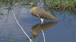 A clear reflection of a heron in water Footage