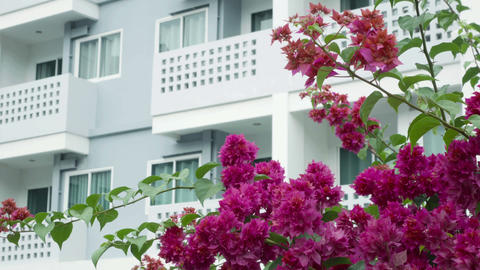 Blossoming Tree On A Background Of A Modern Building stock footage