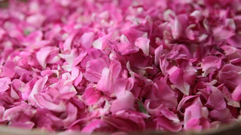 Rose petals Footage