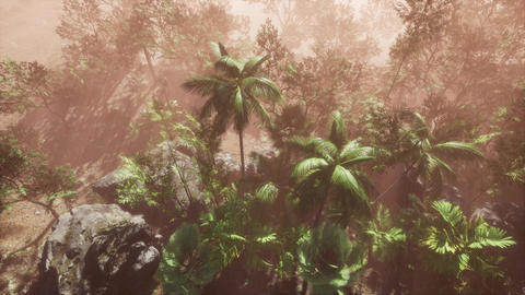 Sunlight shining in tropical jungle Live Action