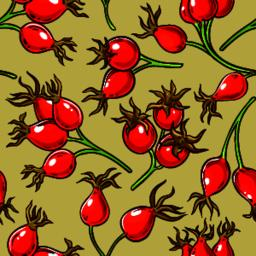 dog rose berries vector pattern on color background Vector