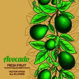 avocado vector pattern Vector