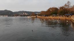 seaside sea and seagulls Footage
