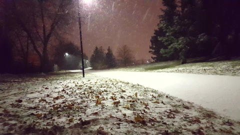 Snowy Night in the Park. Beautiful Evening Snowing View. Night Snowfall Footage