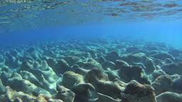 Underwater moving over cute rocks Footage
