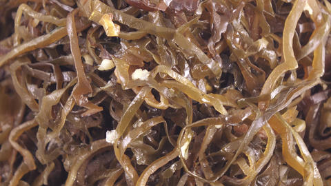 Seaweed Edible in bulk Live Action