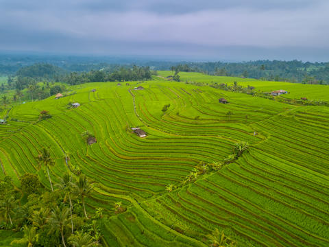 Cloudy Weather over Rice Fields. Aerial View Photo
