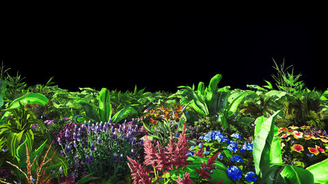 Tropical plants and flowers in the wind with butterflies. With alpha channel Animation