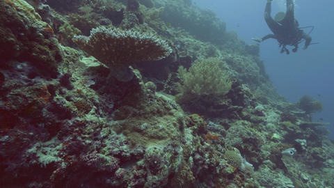 Beautiful coral reef, fish and scuba diver swimming underwater in blue sea Footage