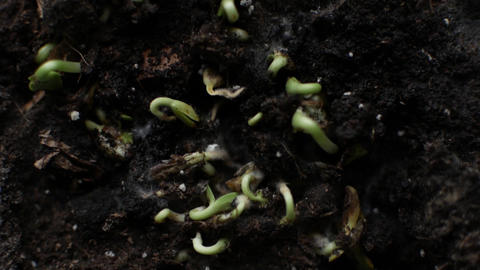 Fresh green plants and seeds growing Footage