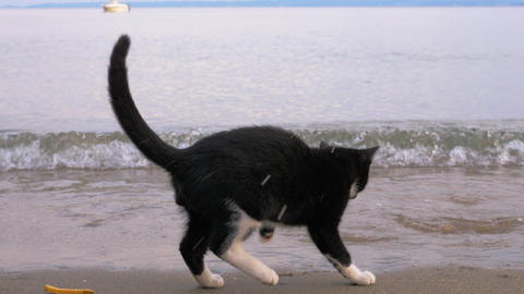 Stray cat wetting paws with sea waves rolling on the beach Live Action