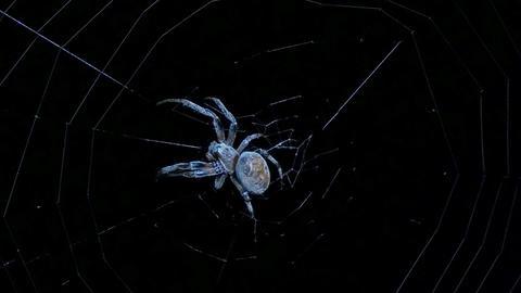big spider the night Footage