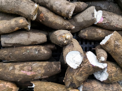 Heap of cassava roots stacked in a market. Traditional food in South America Photo