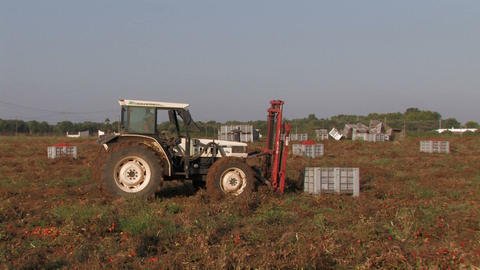 Tractor lifting crates of tomatoes Stock Video Footage
