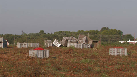 Large crates of tomatoes Stock Video Footage