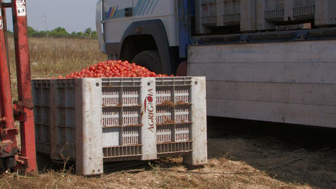 Tractor loading crates of tomatoes Stock Video Footage