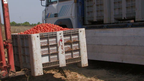 Tractor loading crates of tomatoes Footage