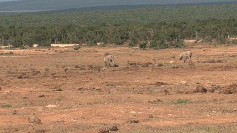 Little Elephants Stock Video Footage