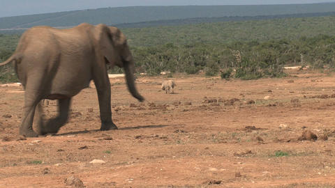 Little Elephants Stock Video Footage