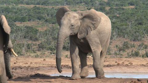 Two big elephants Stock Video Footage