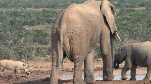 Two big elephants Stock Video Footage