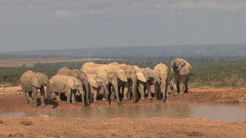 Big group of elephants Stock Video Footage