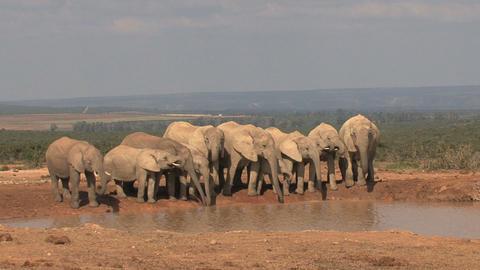 Big group of elephants Stock Video Footage