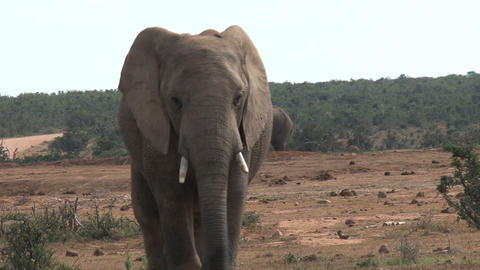 Big elephant Stock Video Footage