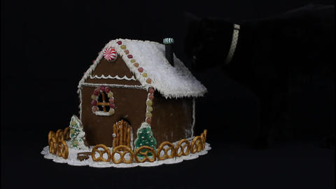 Black cat sniffing gingerbread house Footage