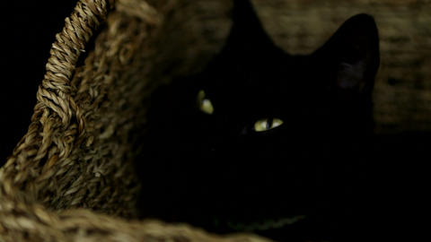 Black cat resting in a basket Footage