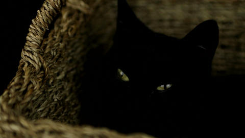 Black cat resting in a basket Stock Video Footage