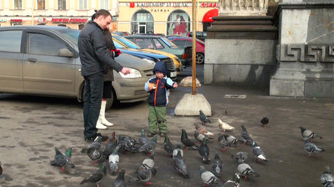 Family feeds pigeons Footage