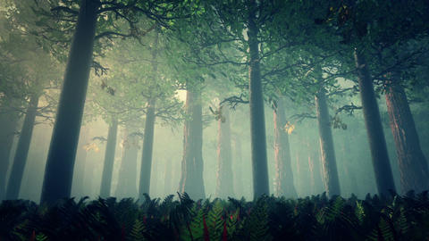 Deep Forest Fairy Tale Scene 3D render Stock Video Footage