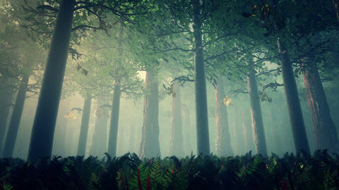 Deep Forest Fairy Tale Scene 3D render Animation