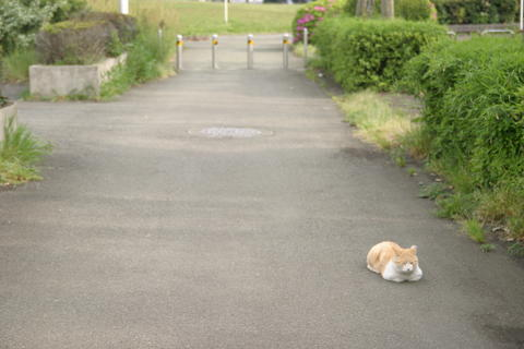 Cat taking a nap at the roadside Photo
