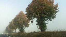 Vehicle Shot of Trees in Summer in Rural Area Footage