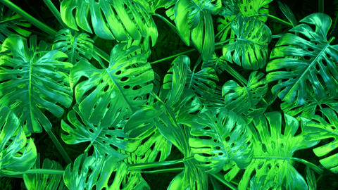 Green abstract plants background Animation