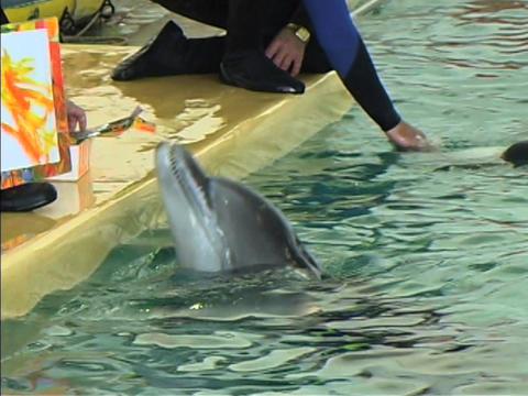 Dolphin draws GIF
